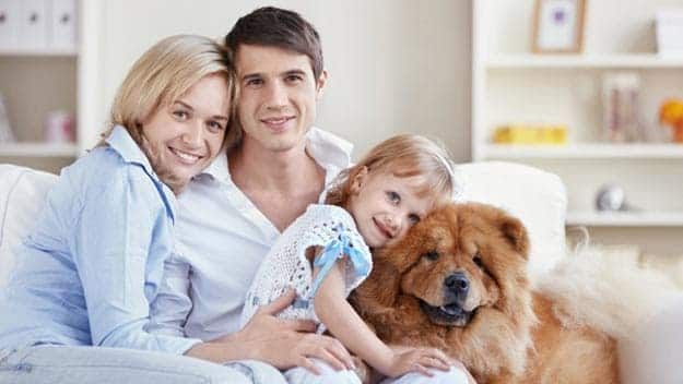 Wills & Trusts dog-young-family Direct Wills Cranfield